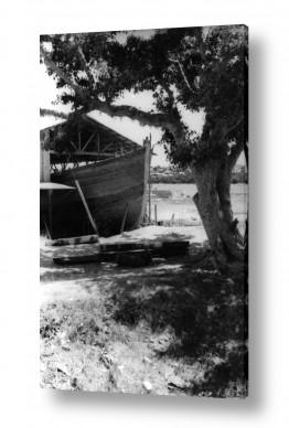 ירקות בצל   תל אביב 1937 סירה בצל עץ