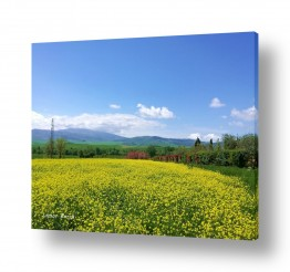 צילומים נוף | שדות צהובים