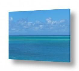 מיים ים | תכלת