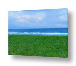 מיים ים | דשא