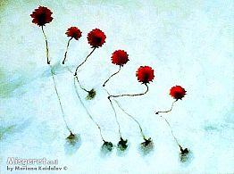 פרחים בשלג