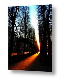 אורבני רחובות   שקיעה בין העצים