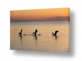 נוף מיים | שקנאים בזריחה