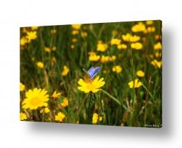 תמונות לפי נושאים חיות | על פרחים ופרפרים