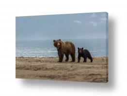 תמונות לפי נושאים גורים | דובה וגור