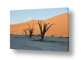 תמונות נופים נוף מדבר | עצים ודיונה