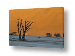 נוף חול | עצים על רקע דיונה