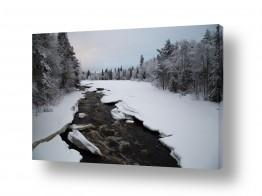 צילומים מזג-אוויר | עצים בשלג