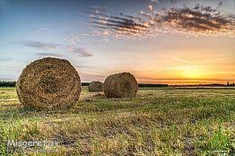 פסטורליה בשדה