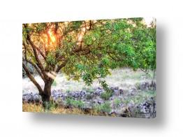 תמונות לפי נושאים לבה | אנרגיה מ הטבע..