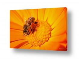 חיות חרקים | צוף החיים