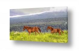 צילומים נוף | סיפור סוסים