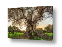 עץ שורש | זוגיות שורשית