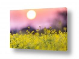 נוף שדות | שקיעה צהובה