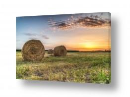 שדות חיטה | פסטורליה בשדה