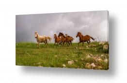 צילומים בעלי חיים | הגולן הפרוע..