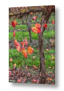צילומים טבע דומם | ניחוחות של סתיו