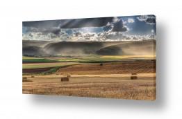 שדות חיטה | הגולן האפריקאי