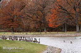על גדות אגם