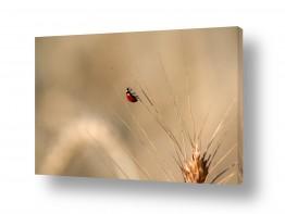 תמונות לפי נושאים חיות | חיפושית