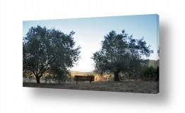 צילומים צילום פנורמי | ספסל לנוף
