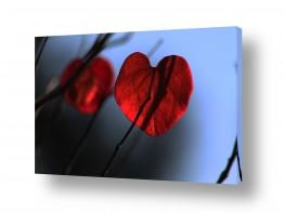 צילומים צילום תקריב | פעימות הלב