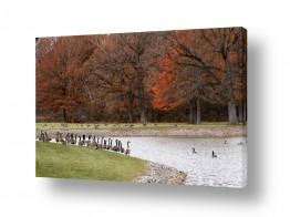 תמונות לפי נושאים רגוע | על גדות אגם