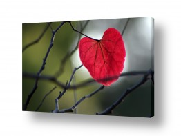 עץ ענף | לב הסתיו