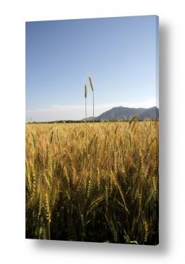 צילומים ארץ ישראלי | צמיחה בשנים