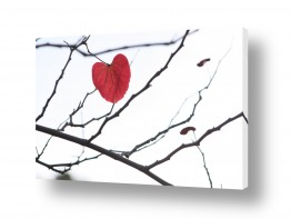 צבעים שילובים של צבע שחור | לב הענין