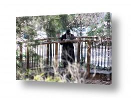 צילומים דת | גשר צר מאד