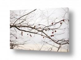 עץ ענף | שיר שקט