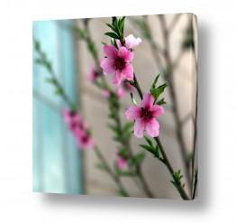 פרחים פרחים בצבעים | פריחה