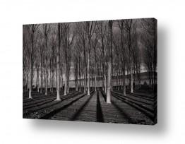 צילומים תמונות שחור לבן | השקט שבלב