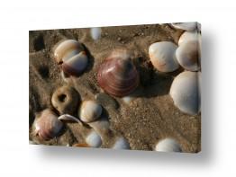 צילומים חופים וים | צדפים
