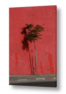 צילומים מבנים וביניינים | עץ על אדום