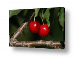 אוכל פירות | פרי גן עדן