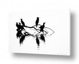 צילומים שחור לבן | together -black and white