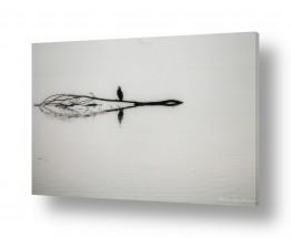 עץ ענף | reflection