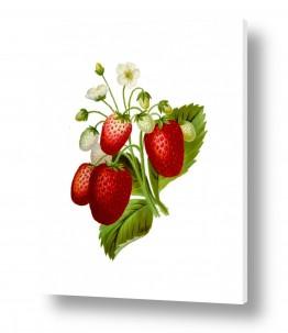 צמחים תות | תות בוטני