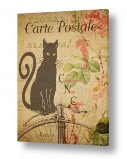 חיות בית חתולים | חתול וינטג