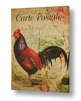 עוף תרנגול | תרנגול וינטג