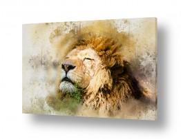 ציורים בעלי חיים | אריה