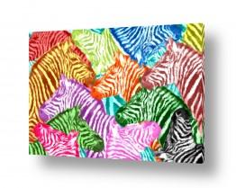 ציורים בעלי חיים | זברות בצבעים