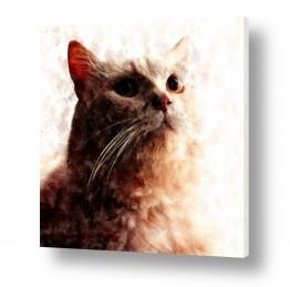 ציורים חדרי ילדים | חתולי