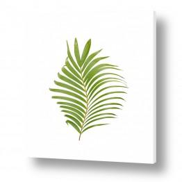 עץ תמר | עלה דקל