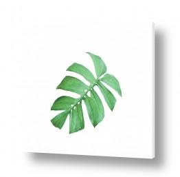 עץ תמר | עלה