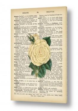 ציורים רטרו | ורד לבן רטרו טקסט