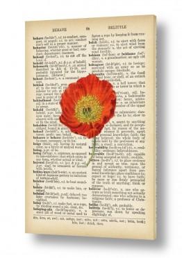 פרחים פרגים | פרג אדום רטרו על טקסט