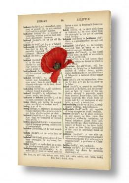 פרחים פרגים | פרג אדום2 רטרו על טקסט